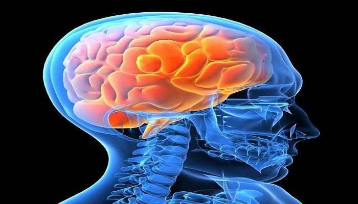 غذاهای مفیدبرای سلامت مغز