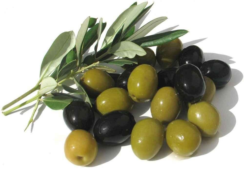زیتون سیاه درمقایسه با زیتون سبز دارای مواد مغذی وروغن بیشتری است