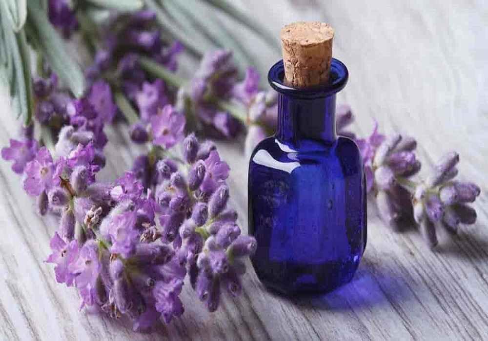 چکاندن روغن بنفشه در بینی برای درمان سر درد مادی توصیه می شود-asemari.ir