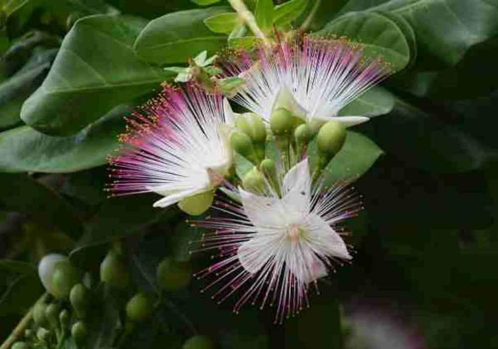 عجیب ترینگیزترین گلهای جهان وشگفت ان