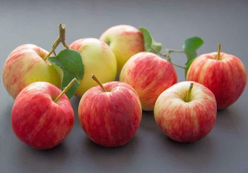 خوردن سیب و گلابی برای بلغمی مزاج ها مفید است