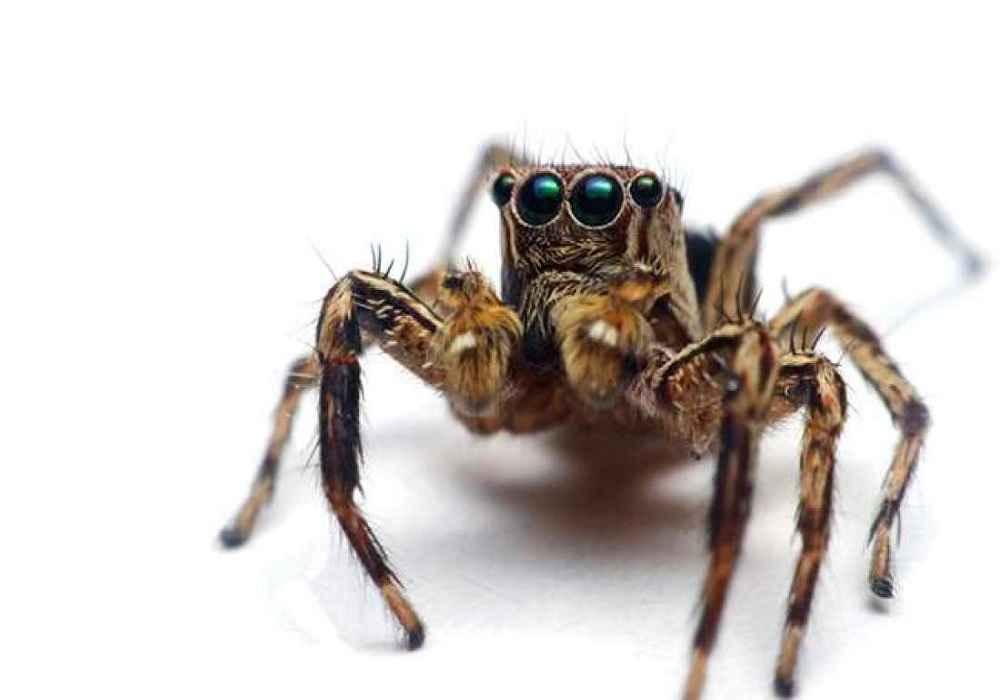 عنکبوت یکی از باهوشترین حیوانات -asemari.ir